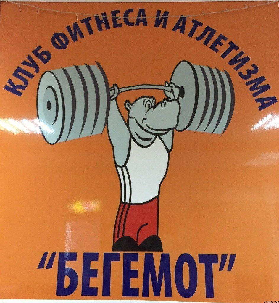 Картинки прикол, смешные картинки бегемот в спортзале